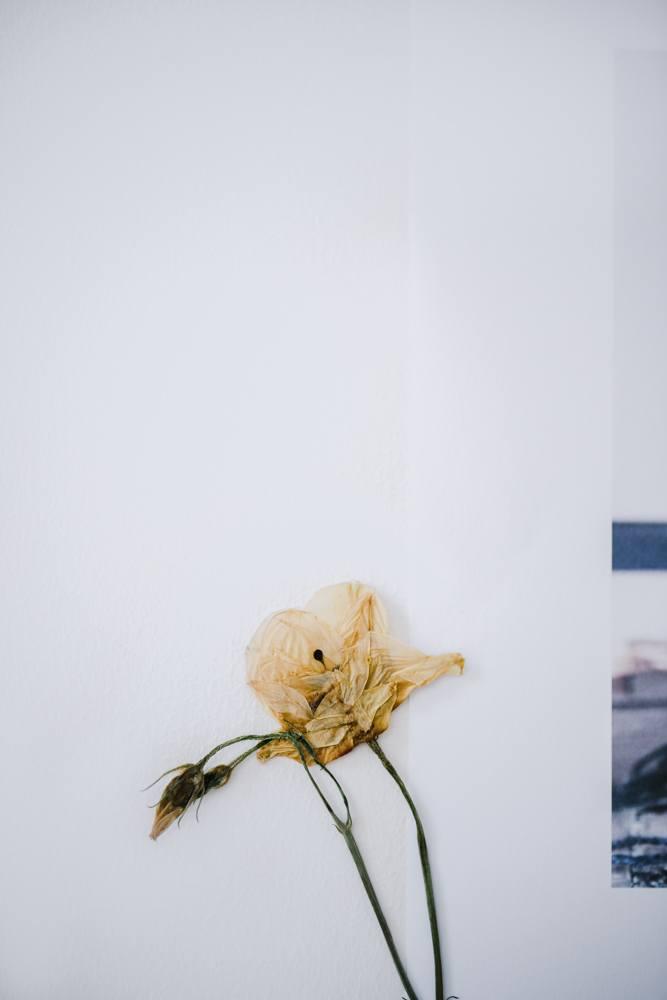 Photography by Christina Greve